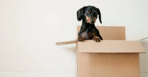 Preparing Your Valuables for Shipping